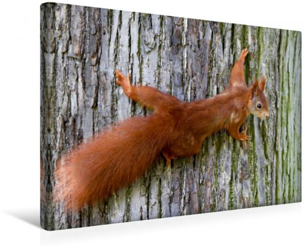 Wandbild Eichhörnchen Tiere Tiere
