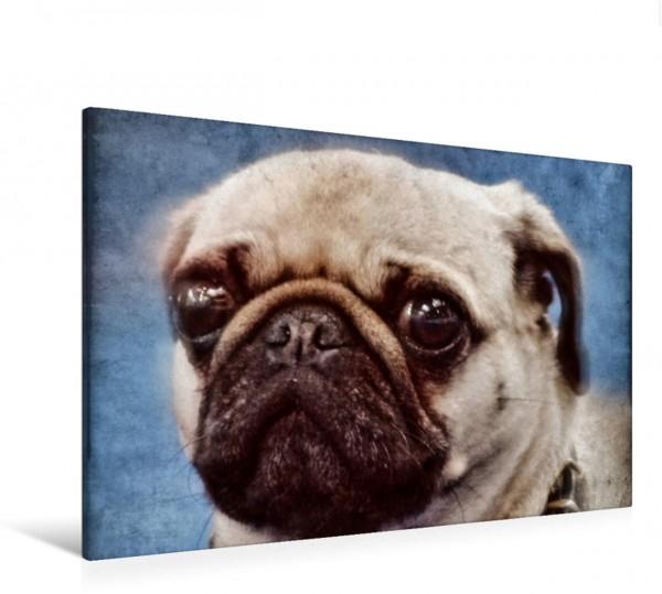 Wandbild Mops Hunde und Haustiere Hunde und Haustiere