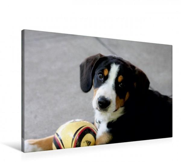 Wandbild Welpe Entlebucher Sennenhund Welpe Entlebucher Sennenhund Welpe