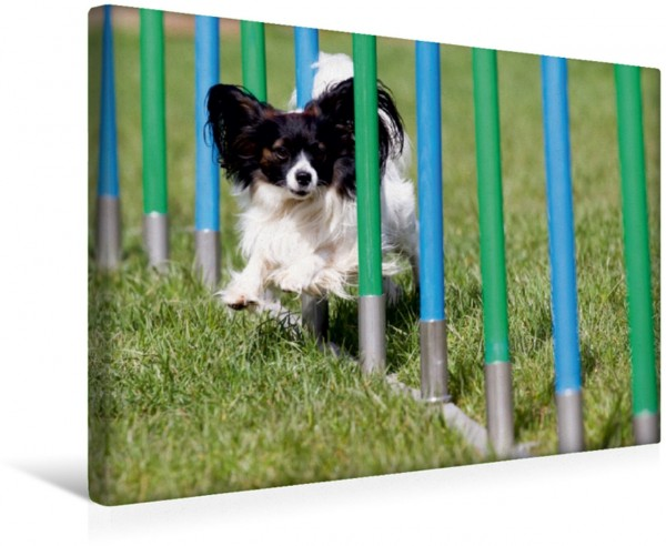 Wandbild Fliegende Hunde beim Agility