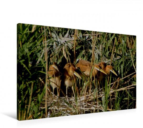 Wandbild Purpurreiher