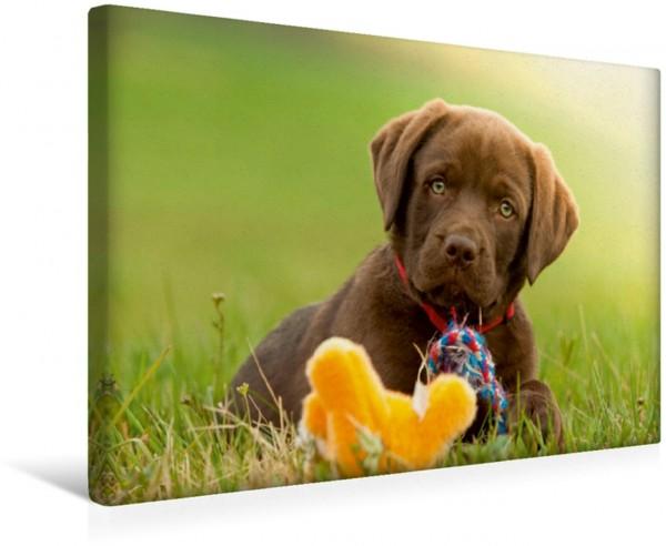 Wandbild Labrador Welpe