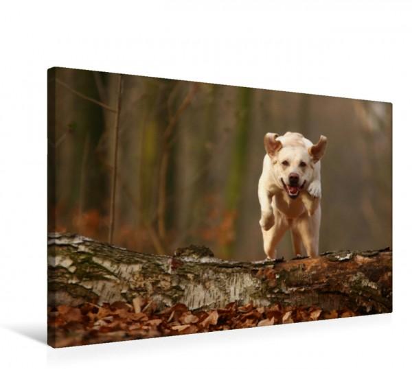 Wandbild Labrador im Sprung Lebensfreude pur! Lebensfreude pur!