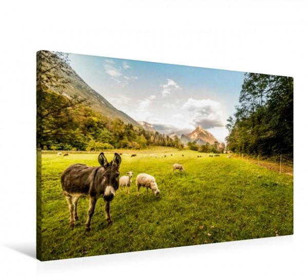 Wandbild Esel und Schafe im Tal der Soea