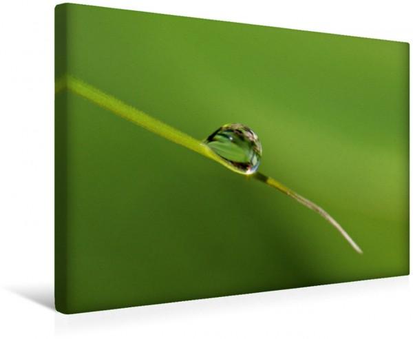Wandbild Meine kleine grüne Wassertropfen Welt