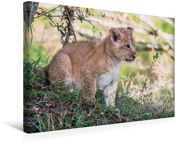 Wandbild Löwenbaby