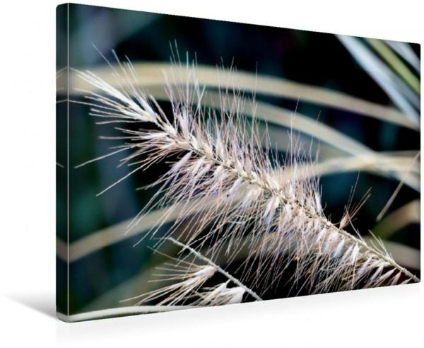 Wandbild Gräser - Detailaufnahme Natur Natur