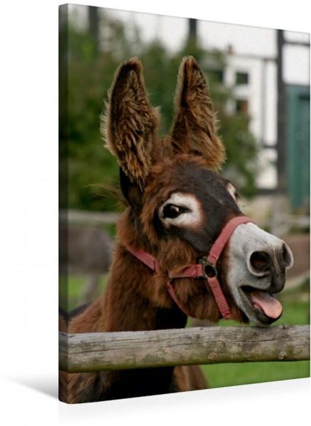 Wandbild Lachender Esel
