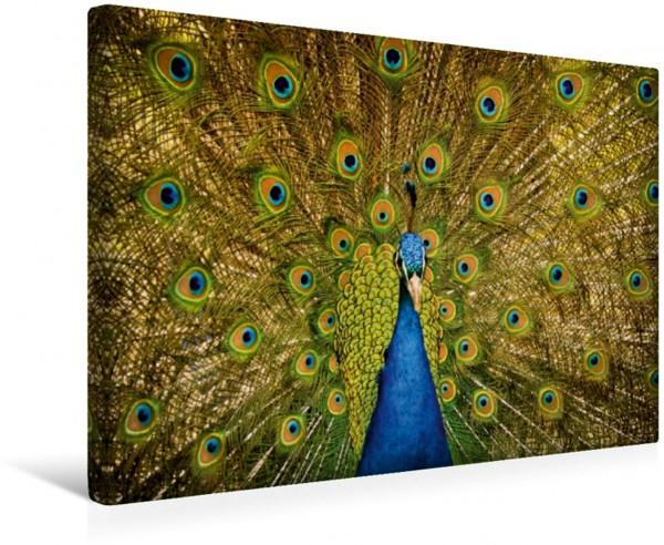 Wandbild Blauer Pfaue beim Balzen Vögel und Tiere Vögel und Tiere