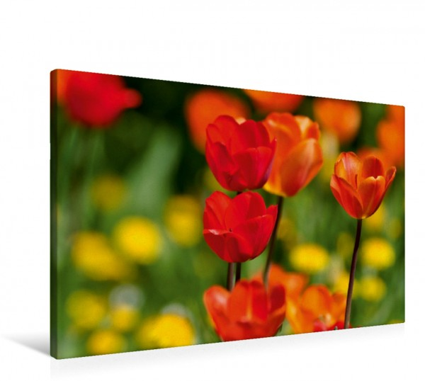 Wandbild Tulpen in rot