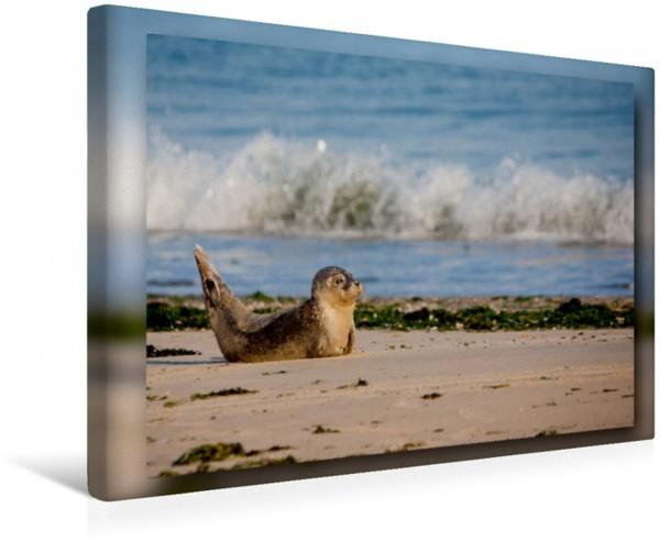 Wandbild Baltrum - Ein Tag am Strand