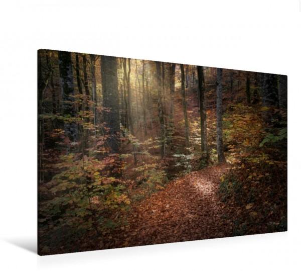 Wandbild Wald im Licht