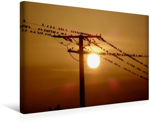 Wandbild Morgenstimmung Eifel Eifel