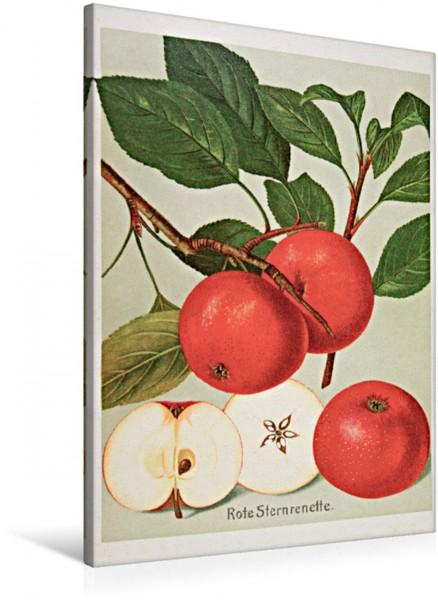 Wandbild Rote Sternrenette, plattdeutsch: Steernappel