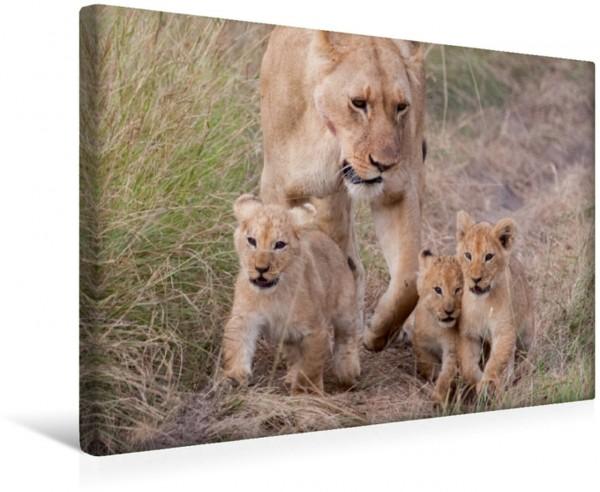 Wandbild Emotional Moments: Lion Cubs - so süß.