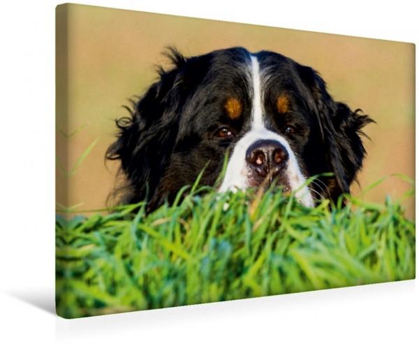 Wandbild Berner Sennenhund - Ich seh Dich