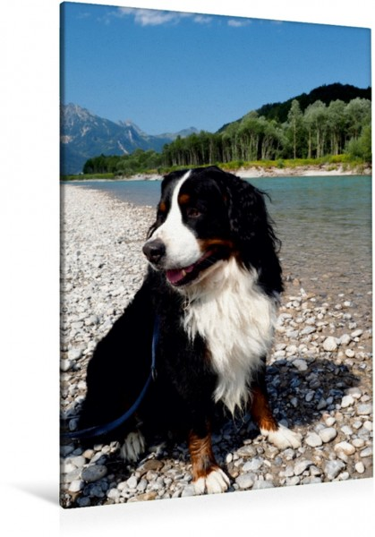 Wandbild BÄR - Der Berner Sennenhund