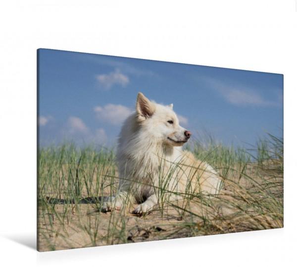 Wandbild Am Strand Mein Islandhund am Strand von Römö Mein Islandhund am Strand von Römö