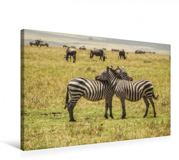 Wandbild Zebras in Kenia Zwei Zebras stützen sich gegenseitig Zwei Zebras stützen sich gegenseitig