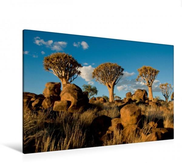 Wandbild Köcherbaumwald Afrika Namibia Keetmanshoop Afrika Namibia Keetmanshoop