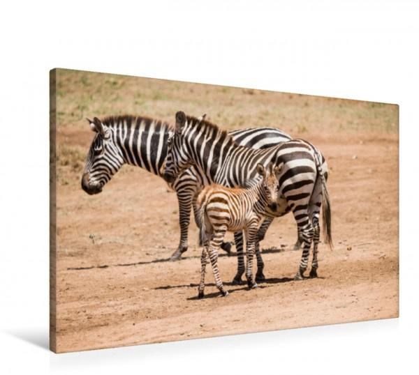 Wandbild Zebras mit Jungtier in der Serengeti Tansanias Wilde Tiere in Afrika Wilde Tiere in Afrika