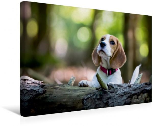 Wandbild Beagle-Welpe im Wald