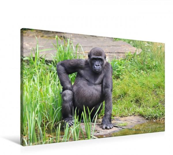 Wandbild Westlicher Flachlandgorilla – Gorilla-Siesta Zeit zum Ausruhen Zeit zum Ausruhen