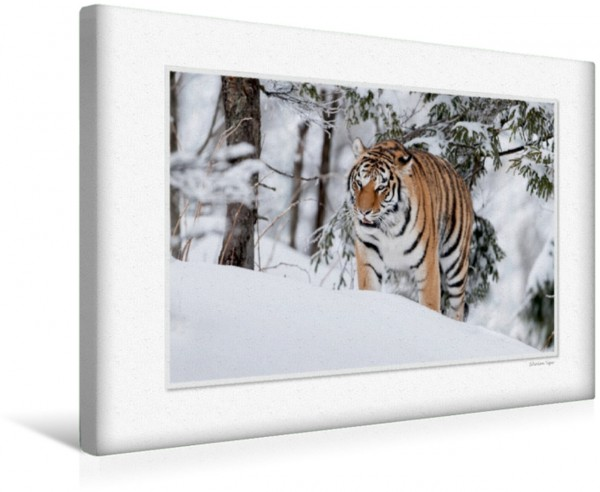 Wandbild Emotional Moments: Big Cats of the World UK-Version