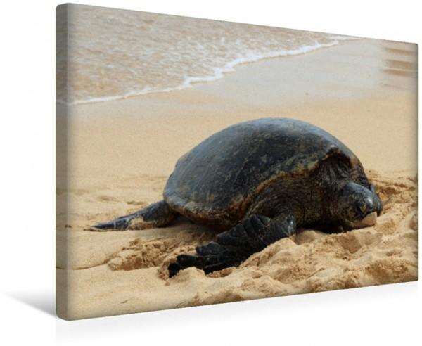 Wandbild Schildkröte am Strand auf Hawaii