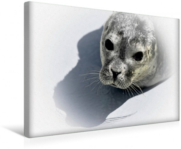 Wandbild Seehunde auf Texel Ein fotografischer Sommerspaziergang auf Texel Ein fotografischer Sommerspaziergang auf Texel