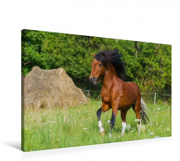 Wandbild Welsh Pony