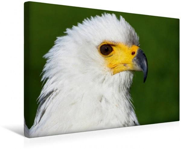 Wandbild Weißkopfseeadler