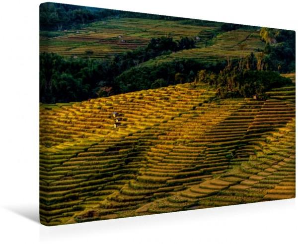 Wandbild Reisterassen in Indonesien Reisterassen in Spinnennetzform auf der Insel Flores in Indonesien Reisterassen in Spinnennetzform auf der Insel Flores in Indonesien