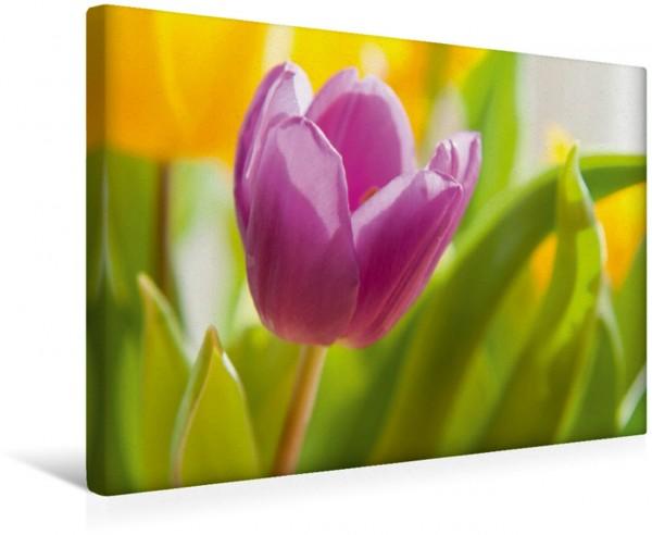 Wandbild Emotionale Momente: Tulpen