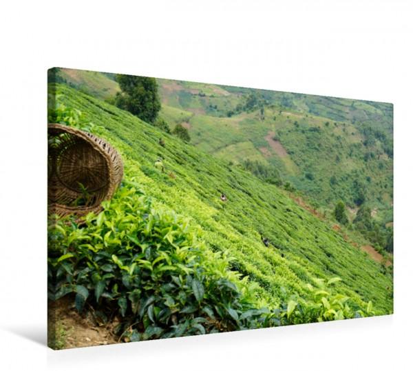 Wandbild Tee-Plantagen