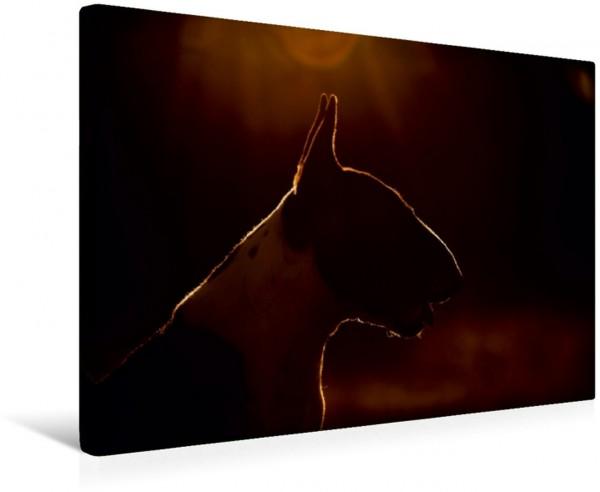 Wandbild Bullterrier Bullterrierpotrait im Sonnenuntergang Bullterrierpotrait im Sonnenuntergang