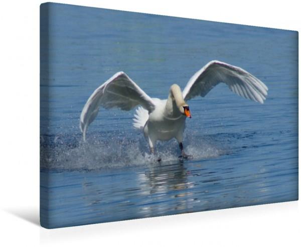 Wandbild Schwanen Flügel Wasservögel und Vögel Wasservögel und Vögel