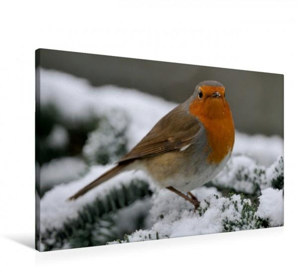 Wandbild Rotkehlchen Heimische Gartenvögel Gefiederte Freunde Heimische Gartenvögel Gefiederte Freunde