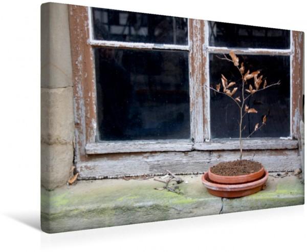 Wandbild Vor dem Fenster Hölzernes Hölzernes