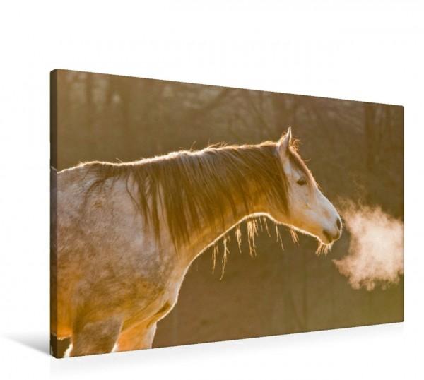 Wandbild Pferde sind Frischluftfanatiker Araber im Winter Araber im Winter