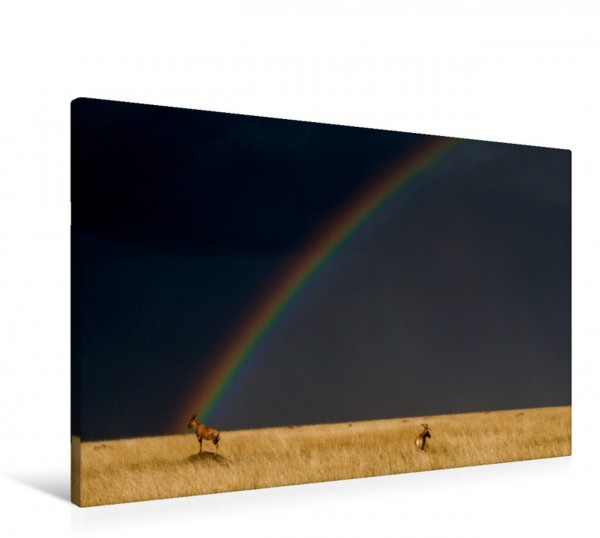 Wandbild Regenbogen und Topis in der Masai Mara in Kenia