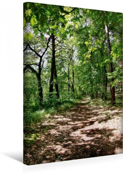 Wandbild Spazierweg im Wald