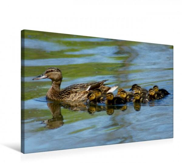 Wandbild Stockente mit Küken Enten und Wasservögel Enten und Wasservögel