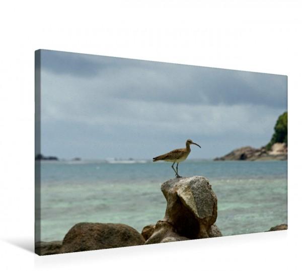 Wandbild Regenbrachvogel