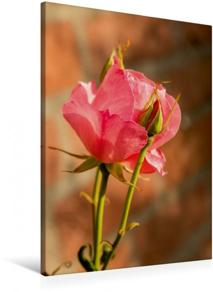 Wandbild Zauberhafte Rosen