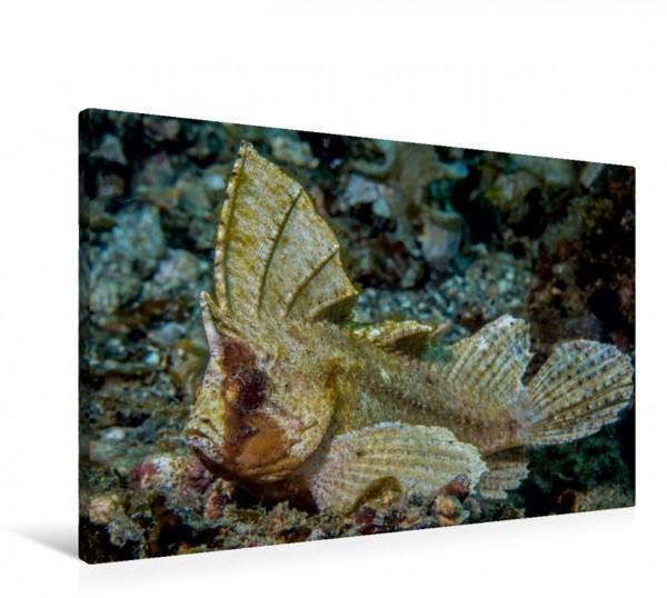 Wandbild Schaukelfisch