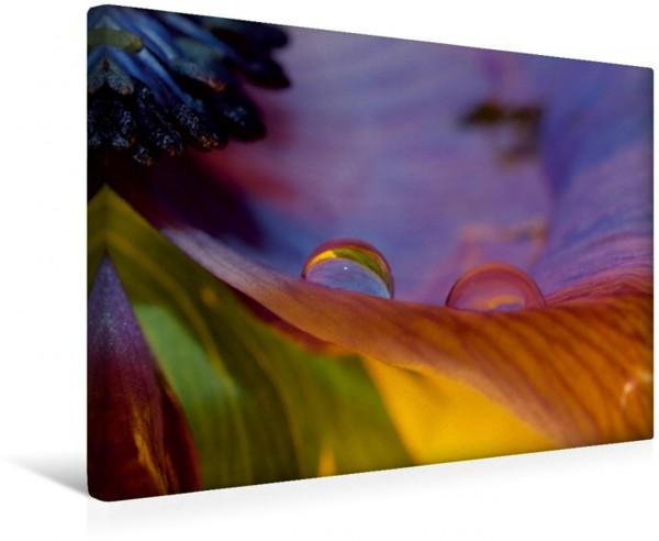 Wandbild Wasserperlen auf Blütenblatt