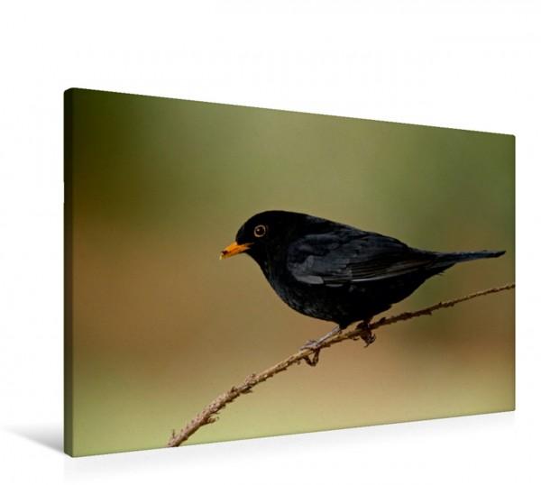 Wandbild INNE BOTANIK - Vögel im Ruhrpott Amsel Amsel