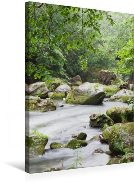 Wandbild Eifel - Deine Kraftorte Wald und Wasser.