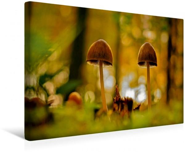 Wandbild Pilzpaar Ein Pilzpaar im herbstlichen Wald. Ein Pilzpaar im herbstlichen Wald.